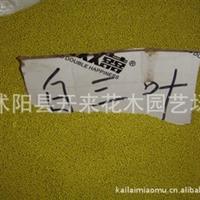 低价批发白三叶种子1-2年树苗工程苗白三叶苗