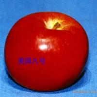 猕猴桃种子猕猴桃籽当年洗猕猴桃种子种苗繁育亚麻酸油原料
