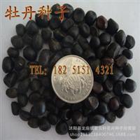 批发花卉种子牡丹种子各种花色牡丹花种子特价30元/斤
