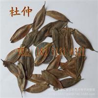 精选优质新采杜仲种子特价杜仲树种子中药杜仲特价20元/斤