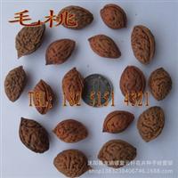 批发新采毛桃种子毛桃树种子毛桃核种子桃树种子特价10元/斤