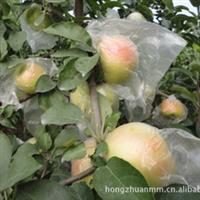 苹果苗价格河南苹果苗价格焦作苹果苗价格2012年苹果苗价格