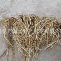 出售龙胆草种子种苗出售北龙胆草种子种苗