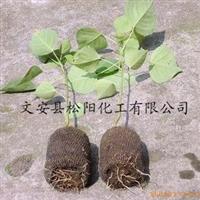 供应幼苗移栽土壤保湿保水剂
