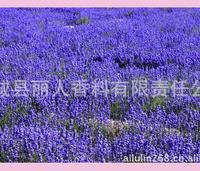 薰衣草种苗---分株苗----新疆伊犁霍城县六十五团之乡---法国蓝苗