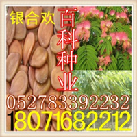 供应:银合欢种子合欢种子(保质保量货到付款)