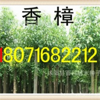 供应:落羽杉1-15公分(现场看货货到付款)