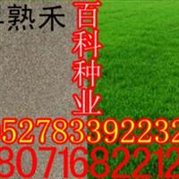 出售草地早熟禾(阿里旗舰店货到付款)