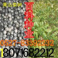 批发供应北栾种子北京栾树种子(保质保量货到付款)