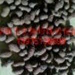 供应陶粒过滤料