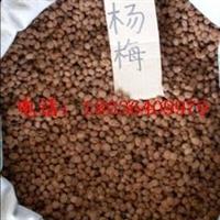 杨梅种子价格