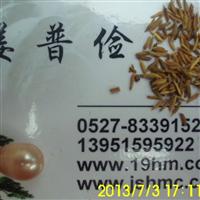 蒲公英种子较新价格紫云英美国籽粒苋紫花苜蓿种子多少钱一斤