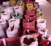 直销丁香种子,杜梨种子,杜英种子,法桐种子