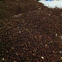 供应枇杷种子_批发林木种子
