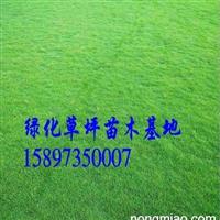 广东马尼拉草皮/广东马尼拉草坪价格