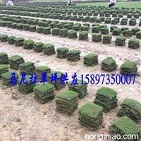 贵州西部草皮供应=贵州草坪价格行情