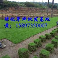 草坪/草皮规格型号 绿化草皮价格 草坪行情