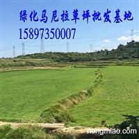 2015【湖北草坪】湖北绿化草坪价格