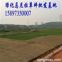 【遵义草皮价格】【贵州遵义草坪】