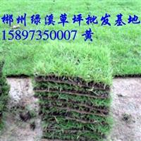 广东哪里有绿化草皮卖【广东绿化草坪】
