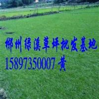 湖南郴州绿化草坪草皮基地
