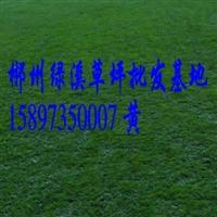 哪里有郴州绿化草皮草坪基地