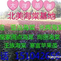 2014年红叶复叶槭价格全国较低价格15104265669