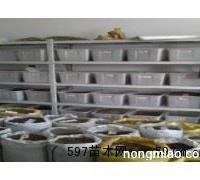 红叶小檗种子多少钱一斤