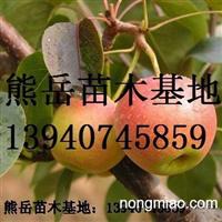辽宁南果梨树苗