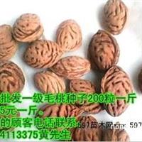 大量供应2014年桃核种子 毛桃种子 桃树种子 桃核 毛桃