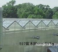 潍坊市较优惠的连栋温室大棚建造推荐