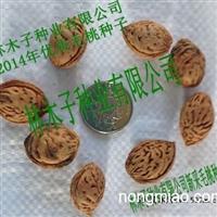 桃树种子价格