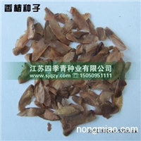 香椿种子,香椿种子播种技术,香椿种子价格,香椿种子出芽率