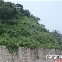 供应安徽草种合肥草种护坡草种三维生态网无纺布播种机等