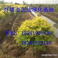 2015年赤峰草坪价格 较低 13941939136