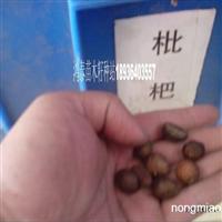 枇杷种子价格