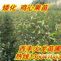 火龙苗圃卖寒富果树苗,123果树苗,王族海棠,紫叶李