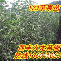 123苹果苗|123果树苗|123果苗13604106318