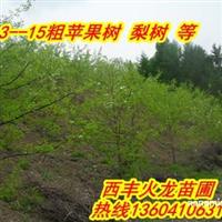 火龙苗圃预售123果树苗,果树苗,寒富果树苗
