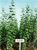 冬季室内观叶植物的养护应注意的几点