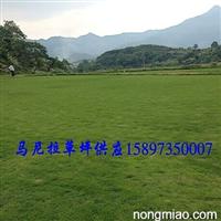 重庆草坪价格~重庆草坪图片-重庆绿化草坪