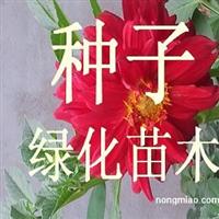 专供花卉种球:马蹄莲 洋水仙 进口郁金香 风信子 朱顶红等