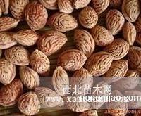 供应桃树种子,各种果树种子,规格齐全