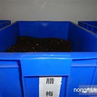 供应腊梅种子,各种灌木种子,规格齐全
