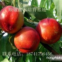 大棚桃树.大棚种植那些桃树品种赚钱