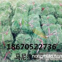 贵州草皮2015价格的改动