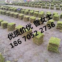 湖北草皮提供专业武汉草皮价格