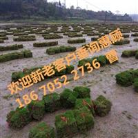 四川草皮近期销售价格是多少?