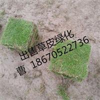 【贵州草皮价格】贵州草皮价格多少