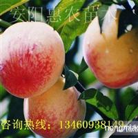 济源濮阳许昌漯河哪里有卖桃树苗的